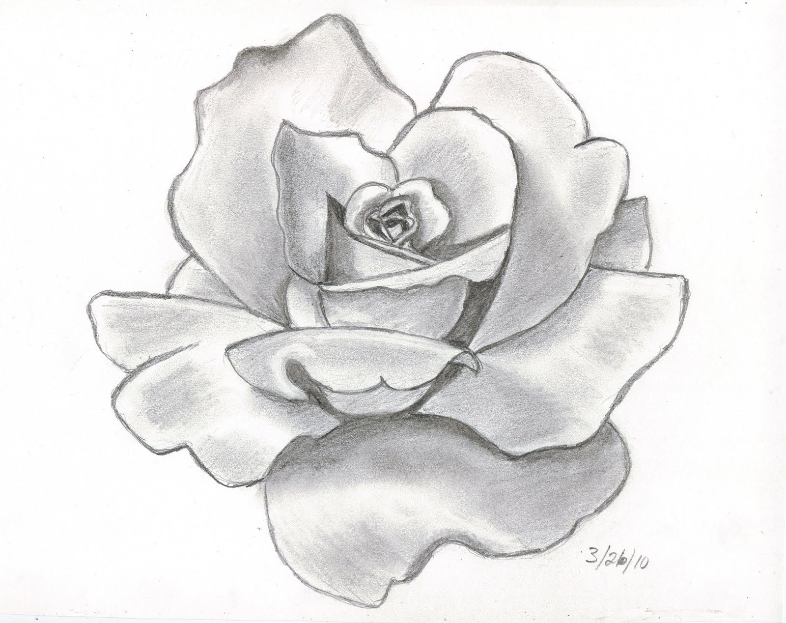 1600x1268 Red Rose Sketch Lead Pencil Pencil Drawings This Is My First