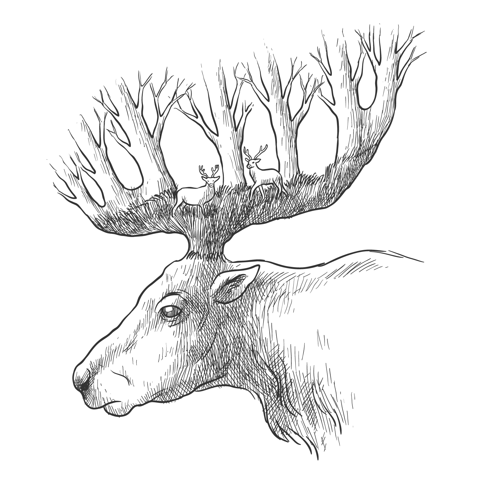1600x1600 Red Deer Gray Wolf Drawing