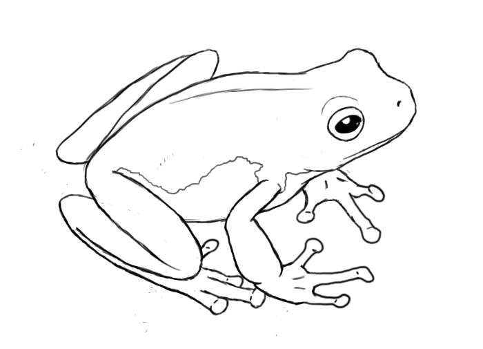 700x505 How To Draw A Frog Square 1 Art Ideas Frog Drawing
