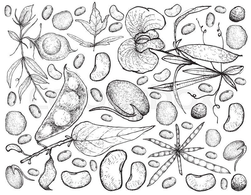 800x622 Vegetable, Illustration Background Pattern Of Hand Drawn Sketch