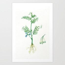 264x264 Lentil Art Prints Society6