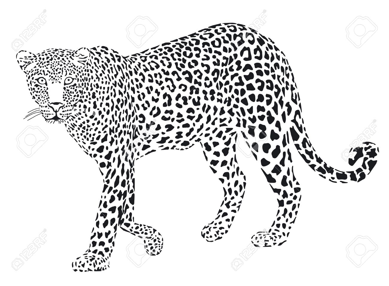 Leopard Black And White Drawing