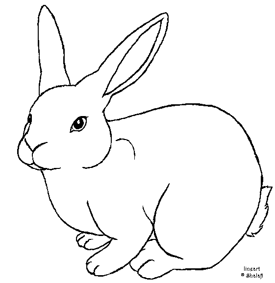 Line Drawing Of A Bunny