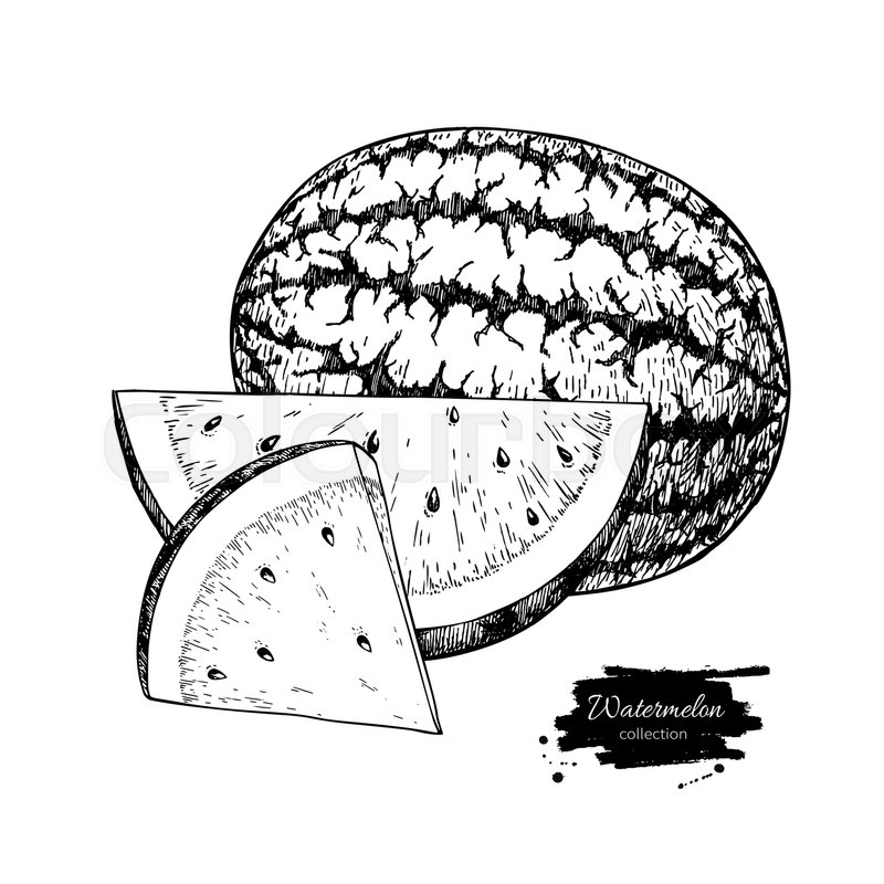 800x800 Watermelon And Slice Vector Drawing. Isolated Hand Drawn Berry