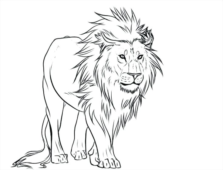 735x561 Lion Outline Drawing Simple Line Drawing Of Lion Yahoo Image