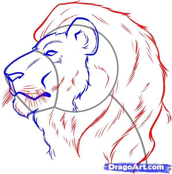 596x603 How To Draw A Lion Face, Step By Step, Safari Animals, Animals