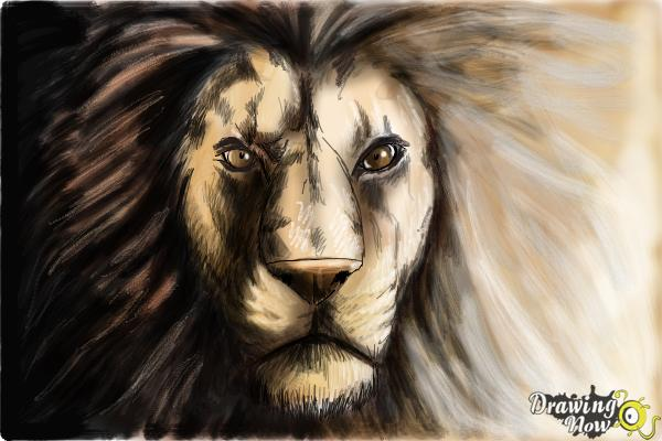 600x400 How To Draw A Lion Face