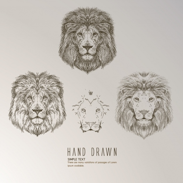 626x626 Lion Head Vectors, Photos And Psd Files Free Download