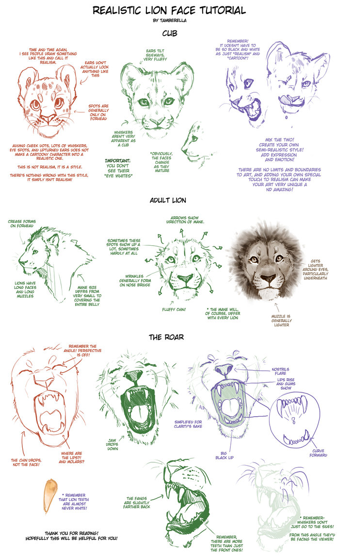 695x1149 Realistic Lion Face Tutorial By Tamberella
