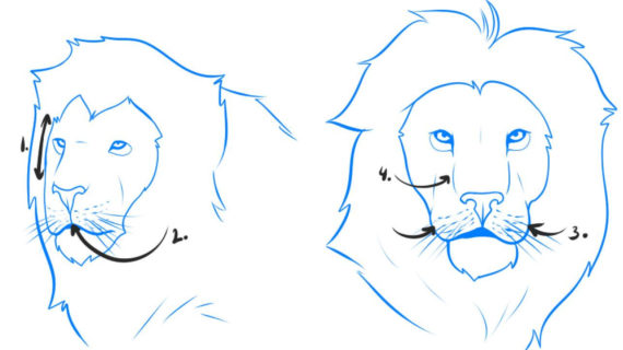 570x320 Simple Lion Face Drawing How To Draw A Lion, Step By Step, Safari