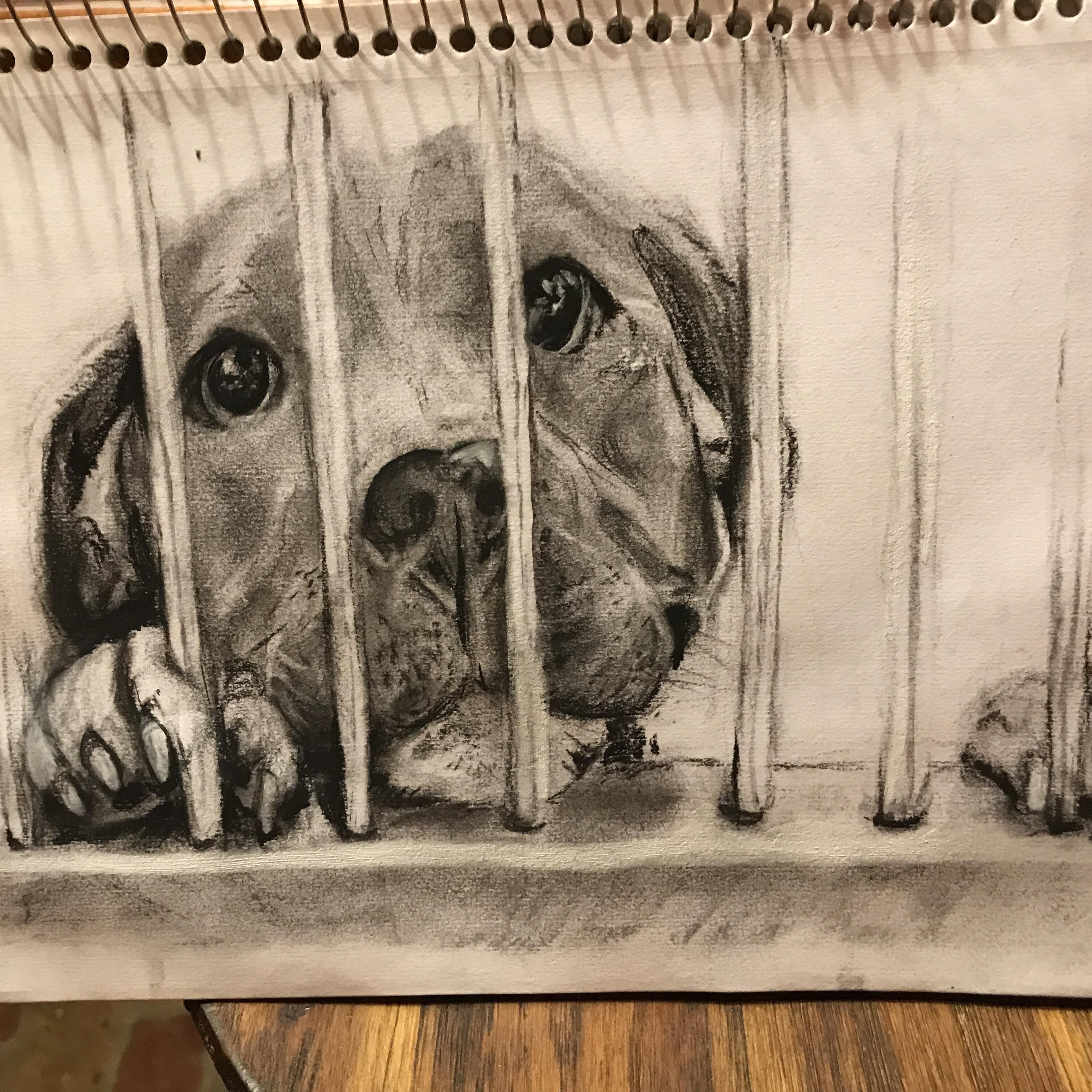 3024x3024 Im Drawing Shelter Dogs To Fundraise For My Local Shelter. [Oc