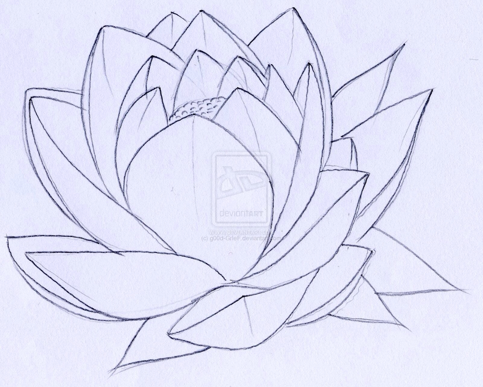 Lotus Flower Black And White Drawing At Getdrawings Free For