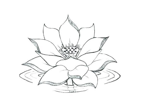 600x463 Lotus Flower Coloring Page Lotus Flower Coloring Page Lotus Flower