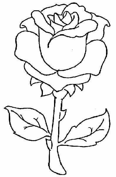 395x601 Rose Drawings Simple Line Floral Rose Drawings