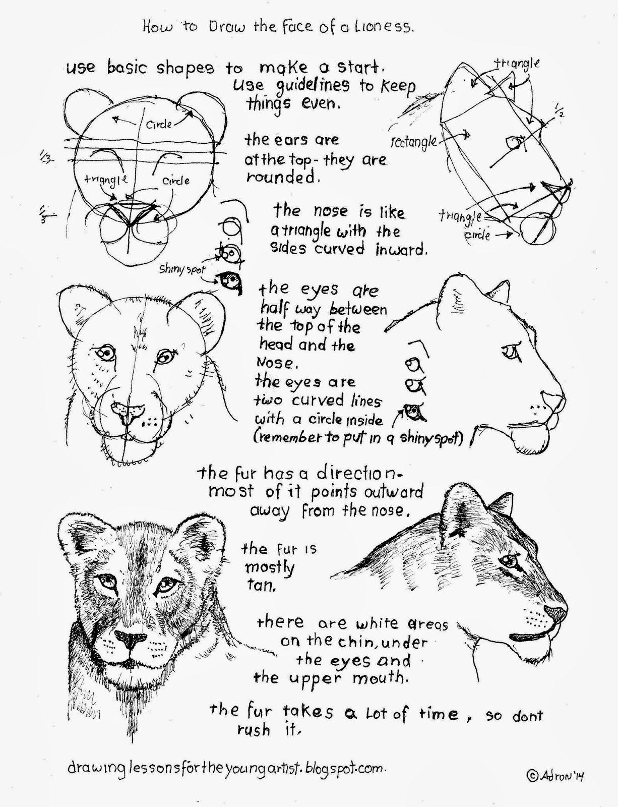 1226x1600 How To Draw Animals. Many Listed. Great For Drawings Of All Sorts