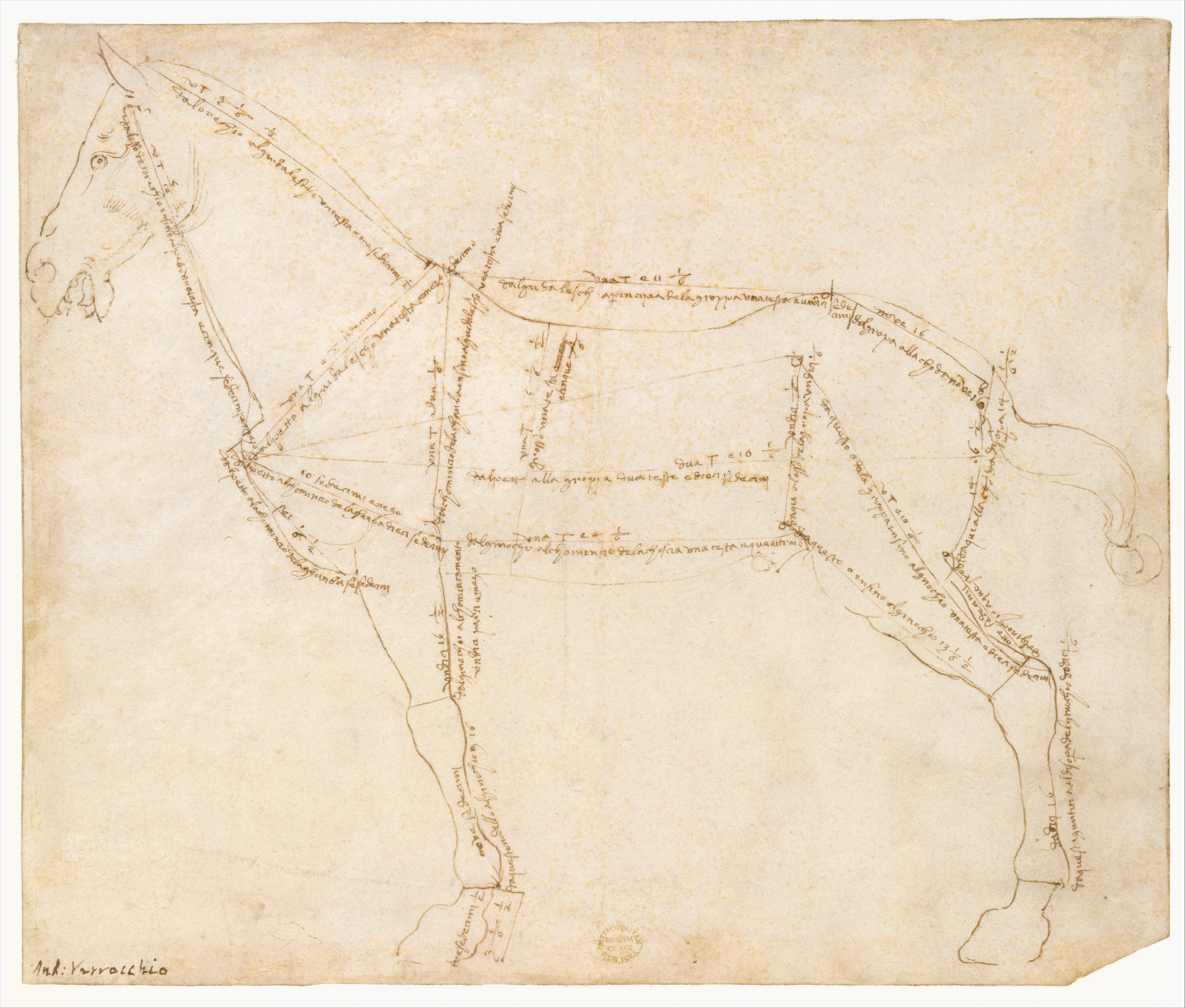 3799x3233 Filemeasured Drawing Of A Horse Facing Left (Recto). Met Dt620
