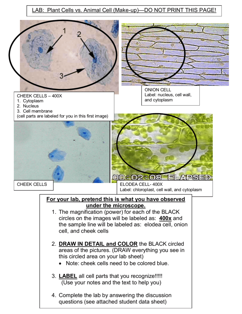Microscope Drawing Circles At Free For Personal Pin Related Pictures Animal Cell Diagram Using Printable Venn On 791x1024 Images