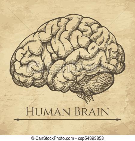 450x470 Brain Retro Anatomic Etching. Anatomical Brains Old Drawing Sketch