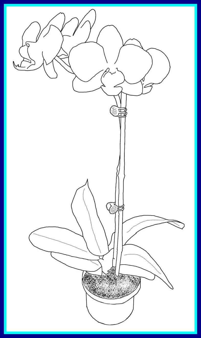 Minimalist Flower Drawing