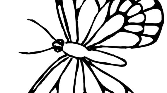 570x320 Monarch Butterfly Line Drawing Awesome Monarch Butterfly Coloring