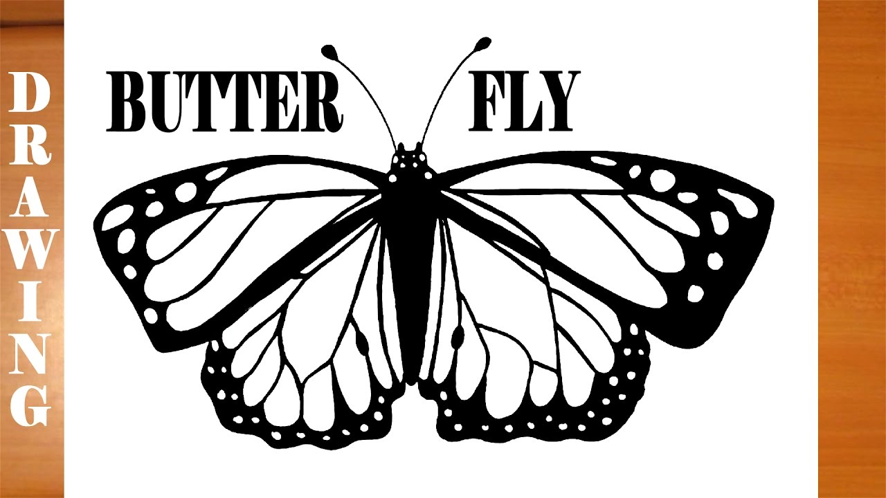 Monarch Butterfly Drawing Black And White At Getdrawings Com Free
