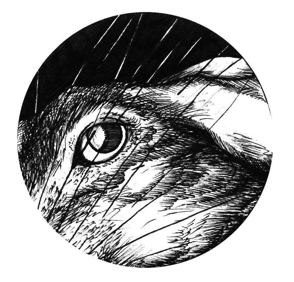 973x935 Projectproposal Jas Bird Illustrations