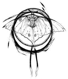 236x274 Close Up Of A Butterfly By Amber Duncan Pen Amp Ink Drawing