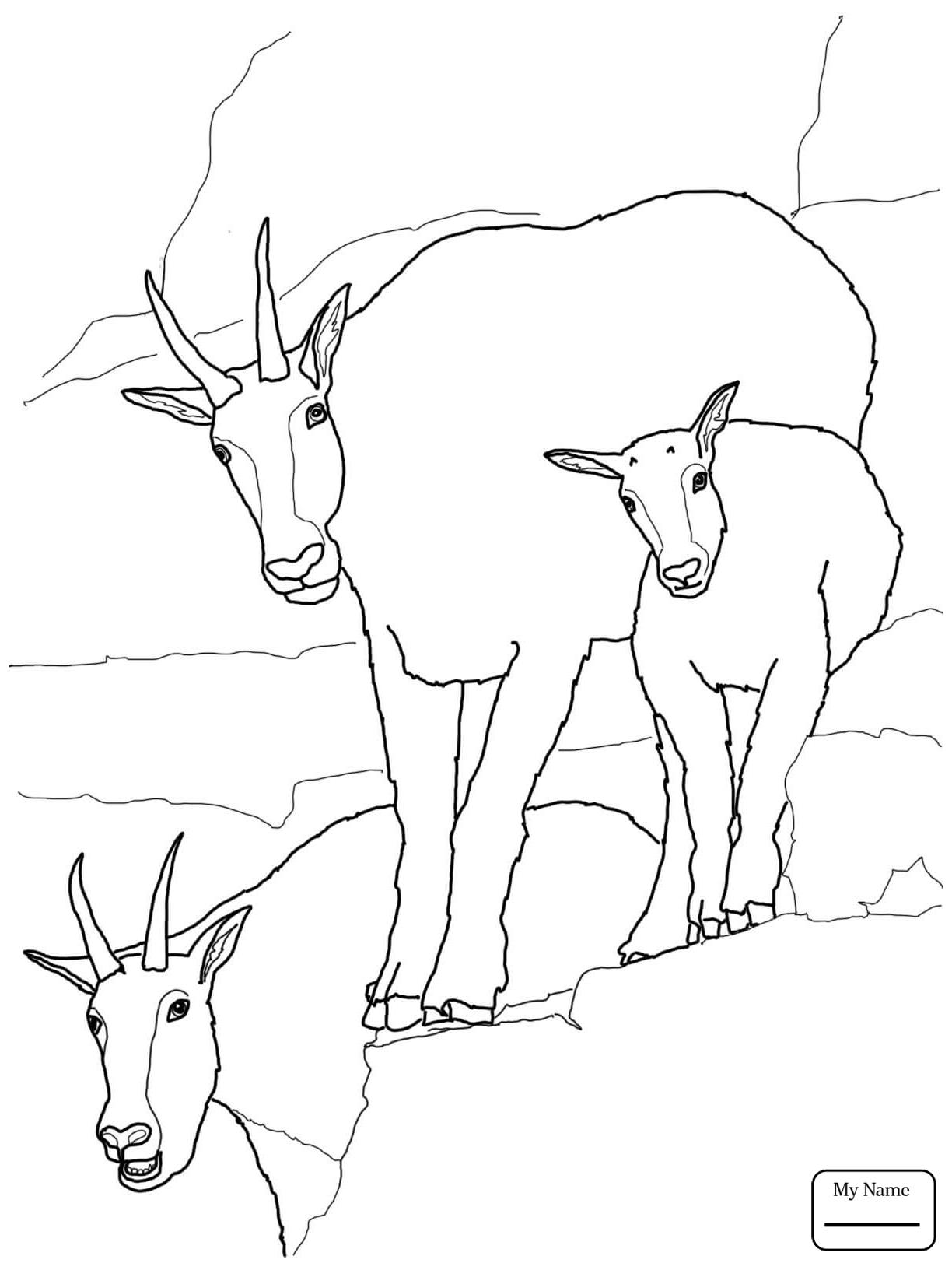 1224x1632 Mountain Goat Clipart Head