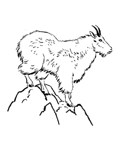 405x497 Mountain Goat Amp Coloring Book