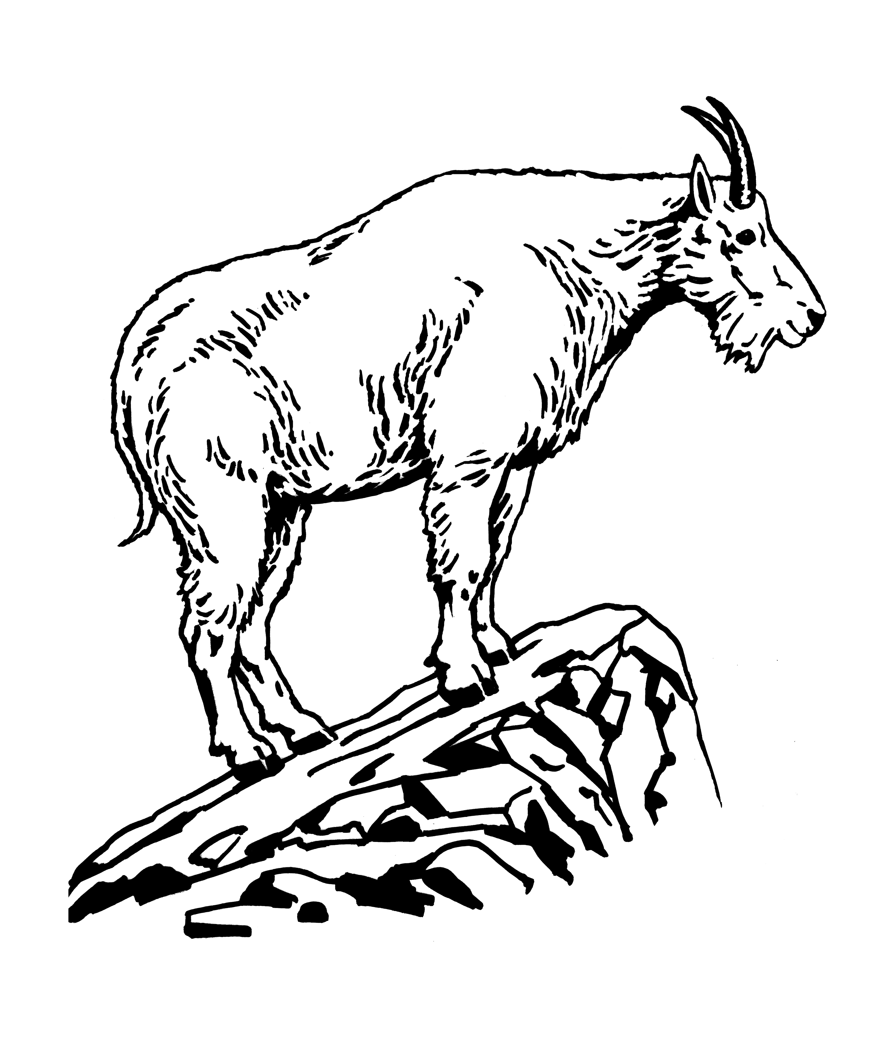2957x3450 Collection Of Mountain Goat Face Drawing High Quality, Free