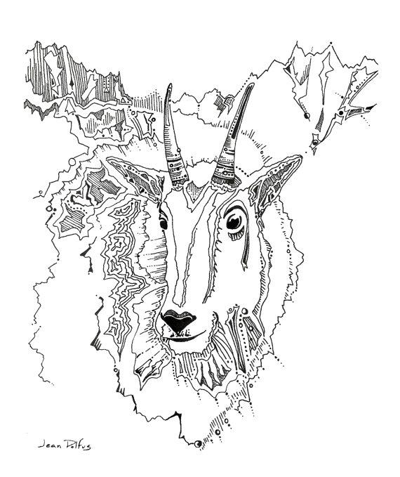 570x679 Mountain Goat Drawing Mt Goat Wildlife Artwork Fine Art