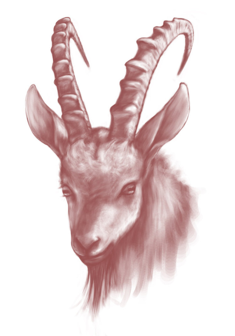 748x1068 Mountain Goat By Defor