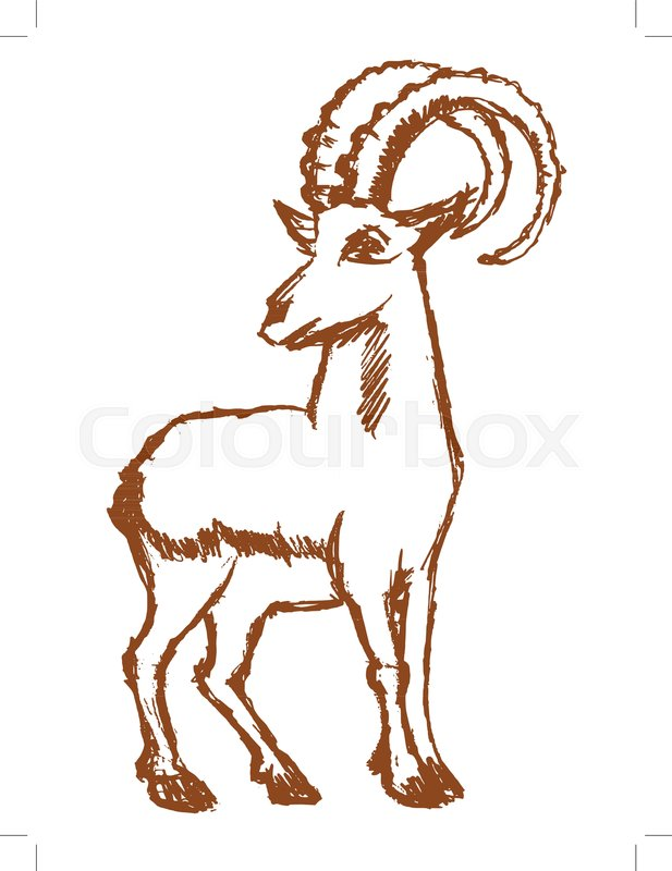 617x800 Vector, Sketch, Hand Drawn Illustration Of Mountain Goat Stock