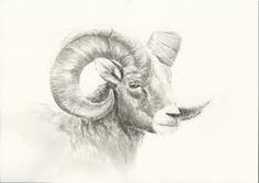 236x167 We Don'T Fight For The Sheeple, We Fight For The Ram. Our Missing