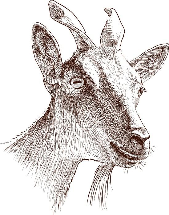 549x700 Mountain Goat Head Sticker We Live To Change