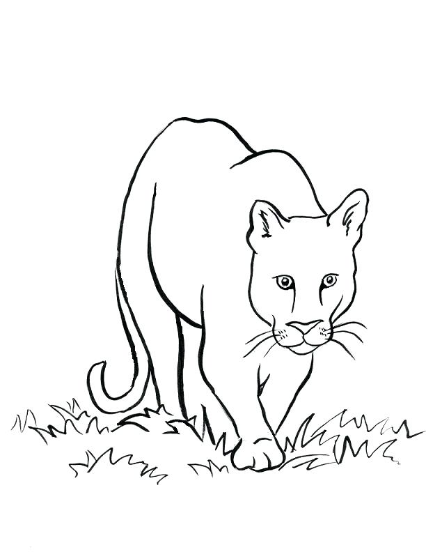 612x792 Lion Drawing For Coloring Mountain Lion Coloring Page Lion Drawing