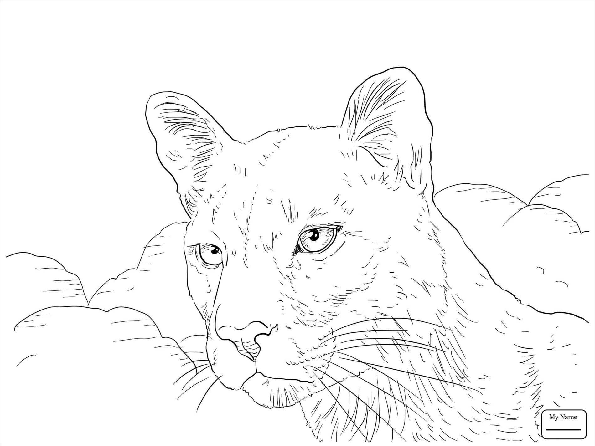 1900x1425 Mountain Lion Face Drawing Design Decoration Ideas