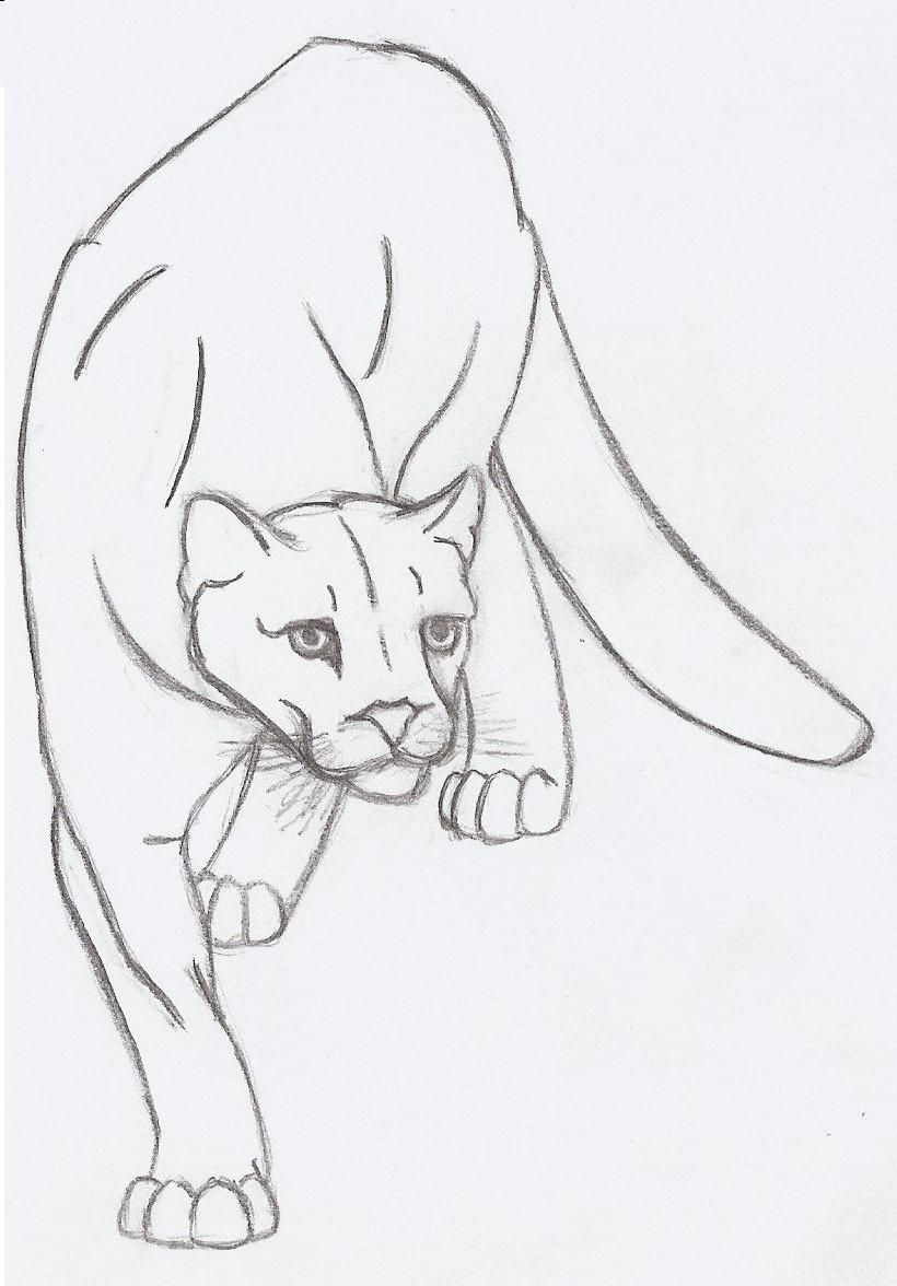 820x1176 Mountain Lion Drawings Drawings I Like Lion