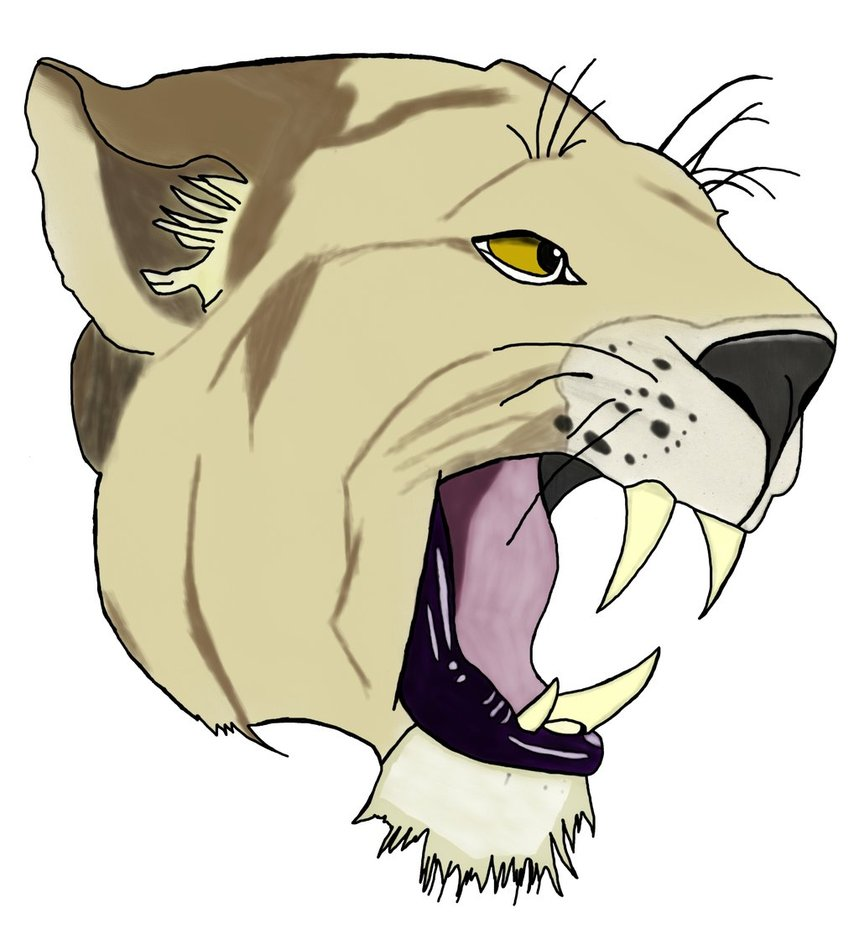 859x929 Collection Of Mountain Lion Face Drawing High Quality, Free