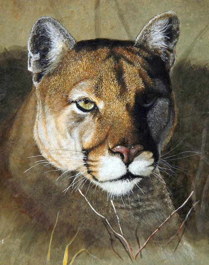 712x900 Mountain Lion Portrait Painting By Stan White
