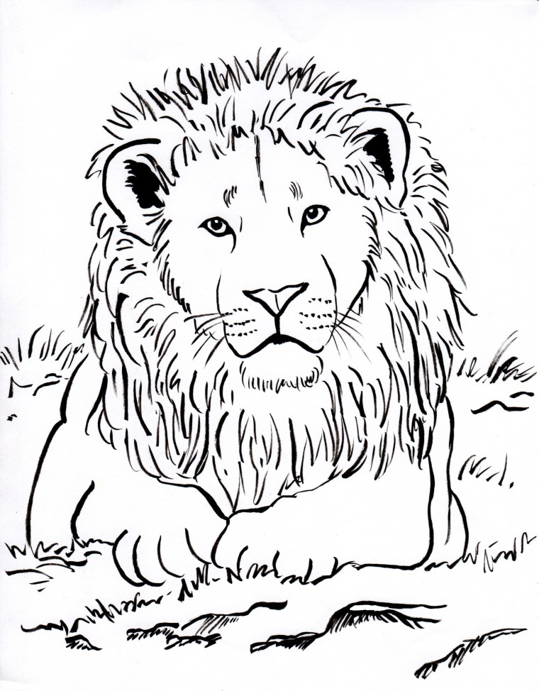 760x974 Mountain Lion Coloring Page Color King Pages With Regard To Lions
