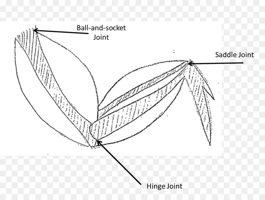 900x680 Buffalo Wing Muscle Fried Chicken Muscular System