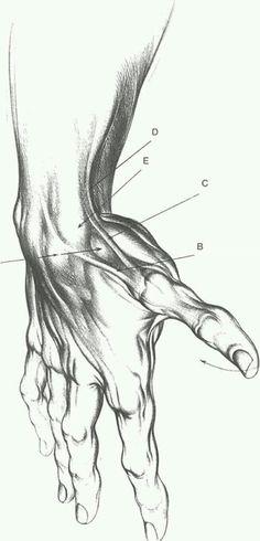 236x490 Gray's Anatomy