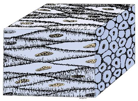 468x344 Collection Of Muscle Tissue Drawing High Quality, Free
