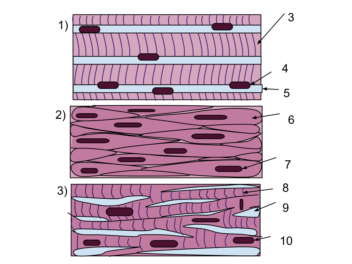 1200x900 Muscle Tissue