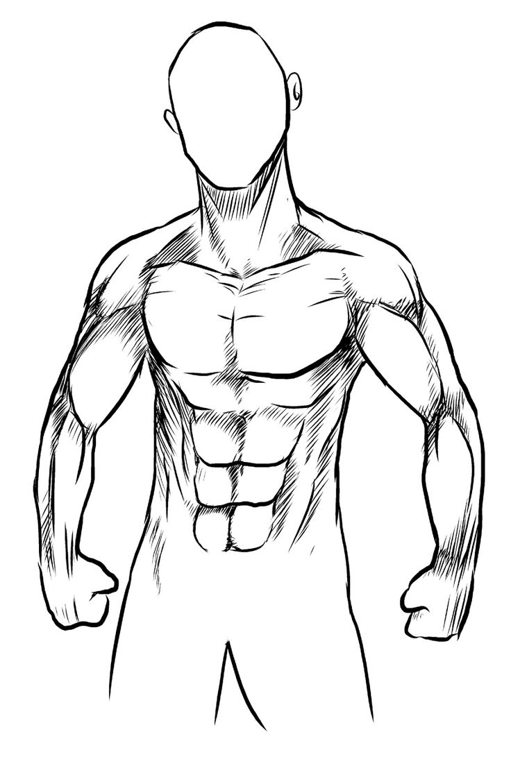 736x1094 8 Best T. M U S C U L A R Images On Muscle Tissue,
