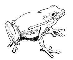 236x195 How To Draw A Frog Quickly I'M Drawing A Blank