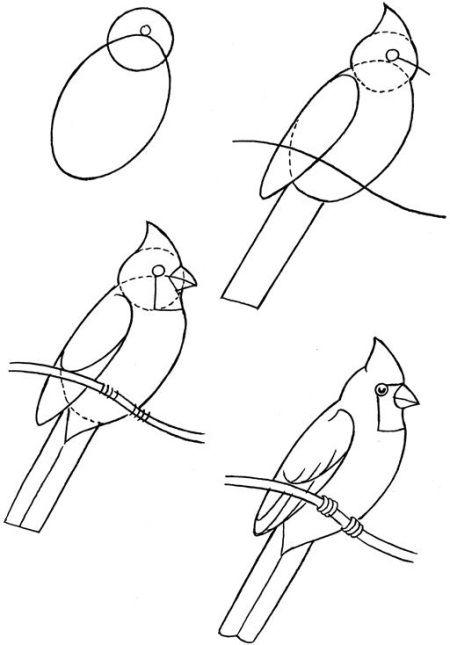 450x645 How To Draw Birds Drawingprintables Bird