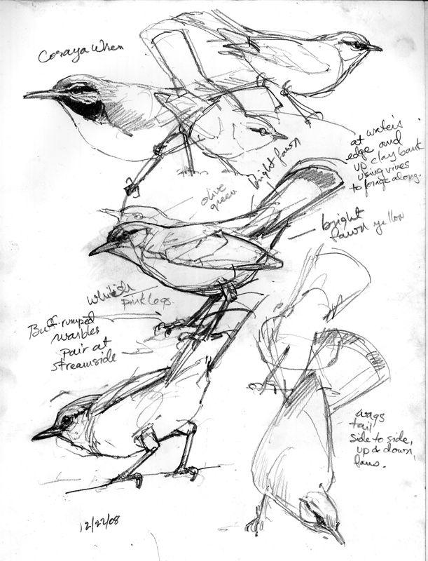 611x800 Mysterious Sounds, Wondrous Sights, And Birds, Birds, Birds