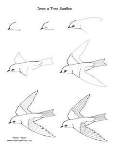 236x305 Check Out Other How To's For Birds And Other Drawing Art Lessons